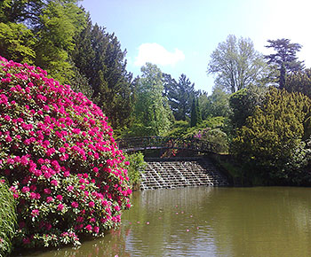 sheffield park gardens sussex