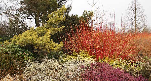 Colourful shrubbery in early April