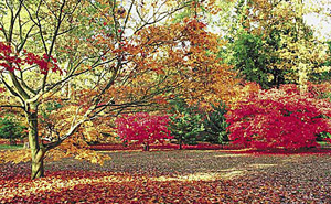 Colourful trees at Westonbirt