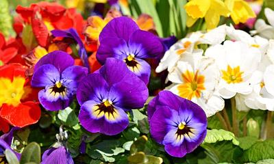 Seasonal Gardening - March in the Flower Garden